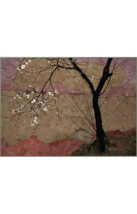 Concord Global National Geographic Photographic Flowering Plum Tree Rug