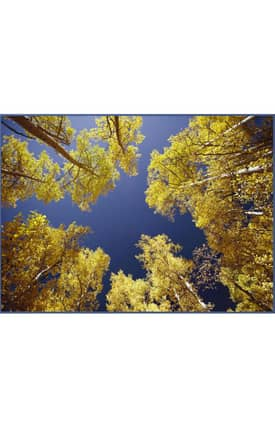 Concord Global National Geographic Photographic Sky Through Trees Rug