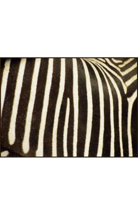 Concord Global National Geographic Photographic Zebra Stripes Rug