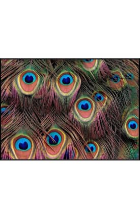 Concord Global National Geographic Photographic Colorful Peacock Feathers Rug