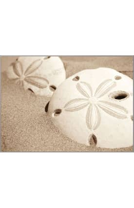 Concord Global National Geographic Photographic Sand Dollars Rug