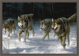 Milliken Wildlife Impression Hautman Wolves on the Move Rug